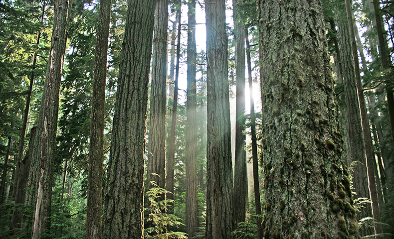 certification and responsible forestry management in U.S. and Canada
