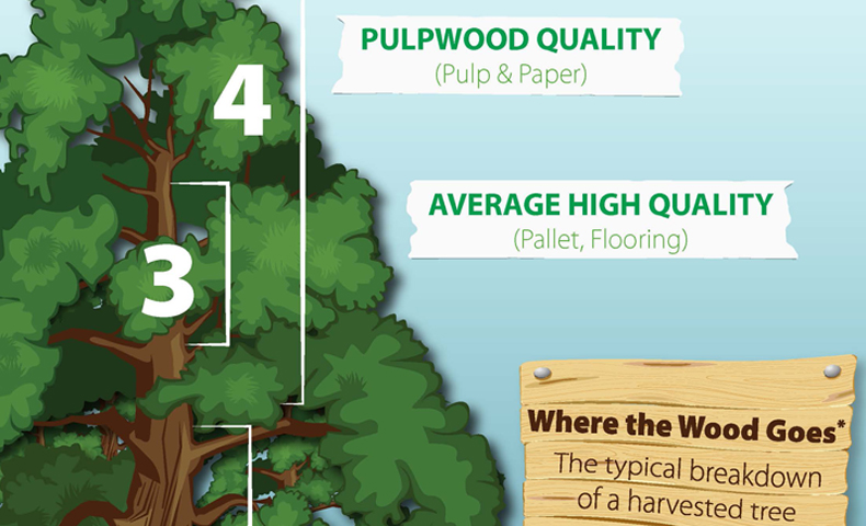 Using Every Part of the Tree responsible forestry practices