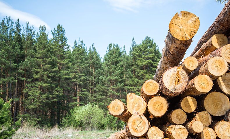 A log stack with forest in background