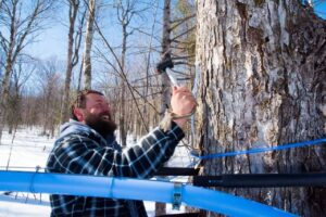 Simon Bellegarde is one of several maple syrup producers who tap trees in the Domtar forest