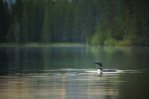 Domtar is committed to boreal forest sustainability